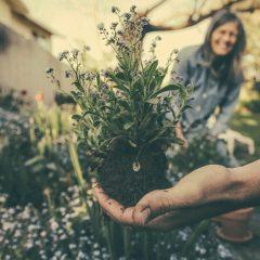 Najpiękniejsze kwiaty ogrodowe