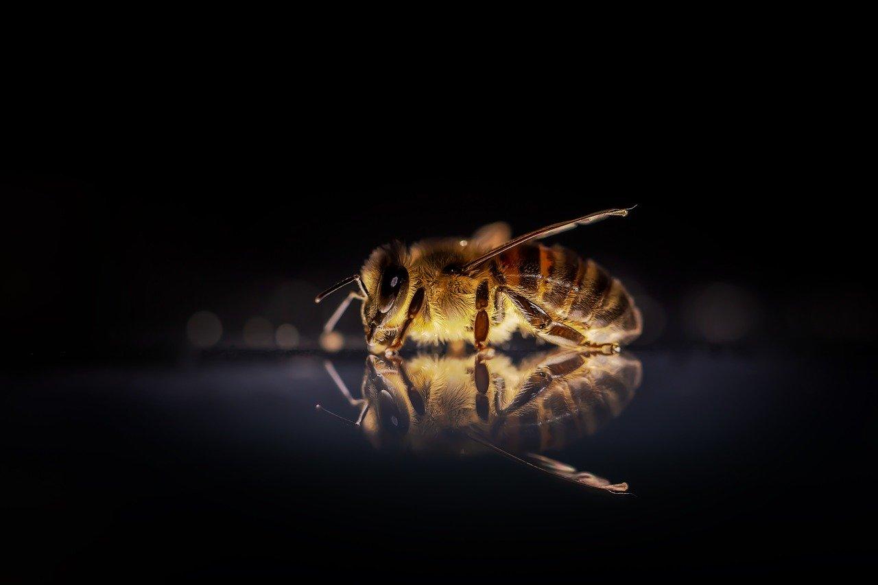 Ukąszenie pszczoły, co wtedy robić, a kiedy niezwłoczne wezwanie pomocy medycznej?